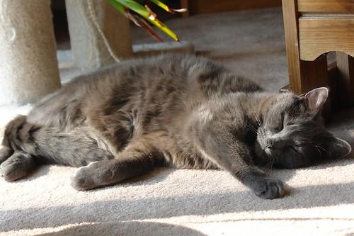 Murphy Sunbathing