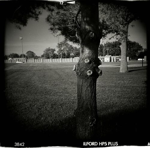 holga-olp-peacetree