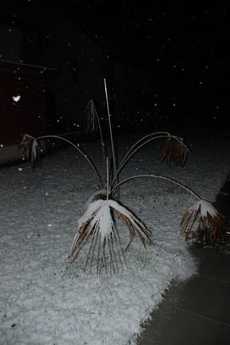 Der_erste_Schnee_2008_00007
