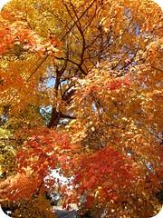 Fall in the ATL