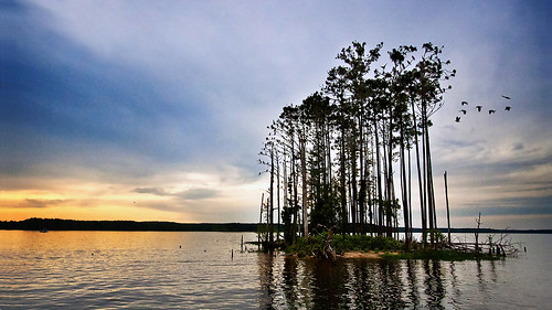 Bird Island, Jordan Lake, NC by drdesigns