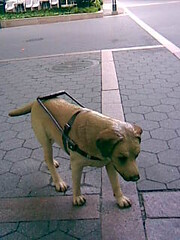 Service dog sculpture at Metrotech Plaza in Br...