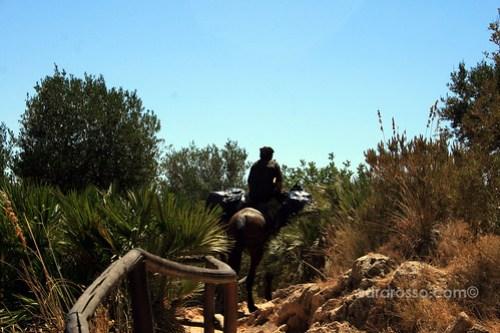 Sicilian Man riding a pack horse, Lo Zingaro Natural Reserve, Sicily