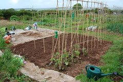 080628-allotment010