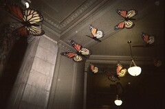 03.29.08 Butterfly Pavilion (2)