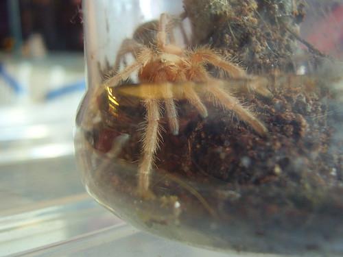 2011-06-24 spider