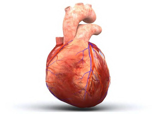human_heart_big.jpg