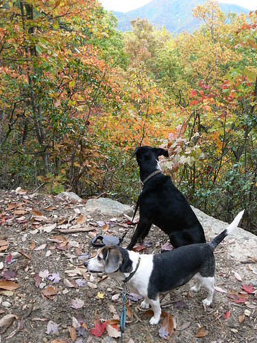 Douthat State Park - Blue Suck Falls Trail - Jimmie and Henry on Trails