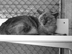 kili-cat1