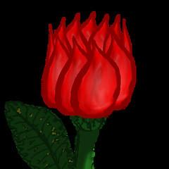 rose-008