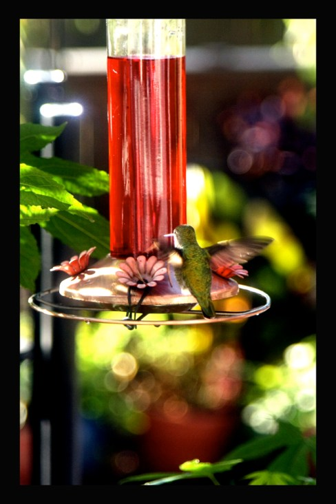 My hummingbird and his own Thanksgiving feast