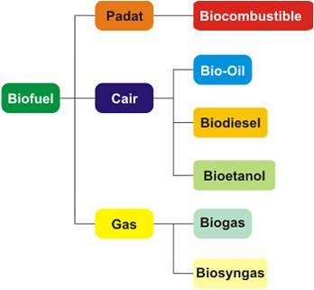 pembagian biofuel