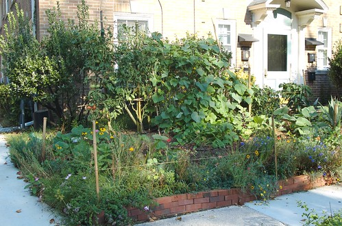 So, this is the garden at the beginning of August. The wildflower are tired, and the vines are taking over!