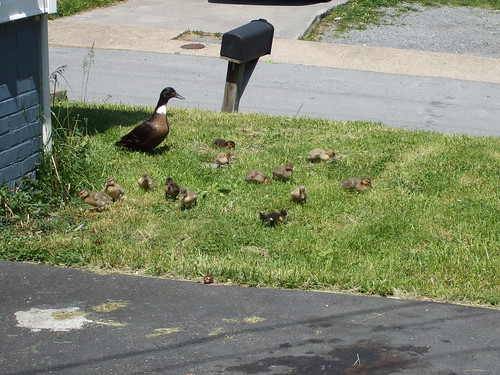 Duckie Family Visit