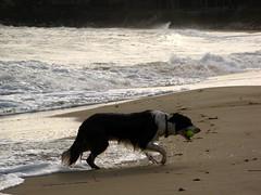 2606 Gromit back on shore
