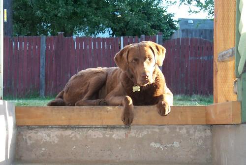 Scout, Sept 11, 2002 - Nov 24, 2008