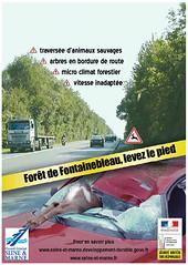 Forêt de Fontainebleau, levez le pied