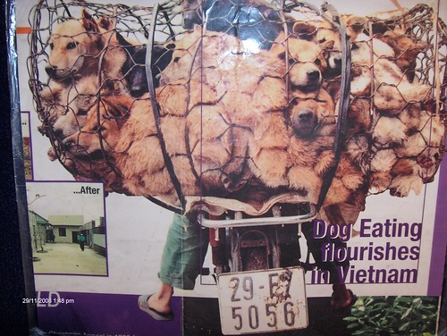Dogs packed together for their eventual slaughter