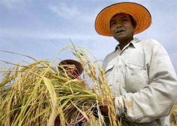 thai_ farmers_ guard_ rice