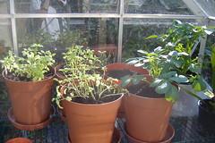 080506-greenhouse454