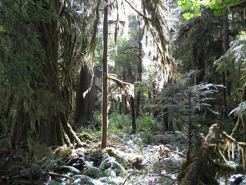 Olympic National Park - Staircase