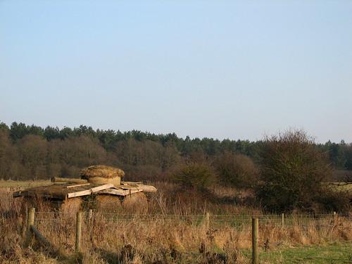 Tank in the field