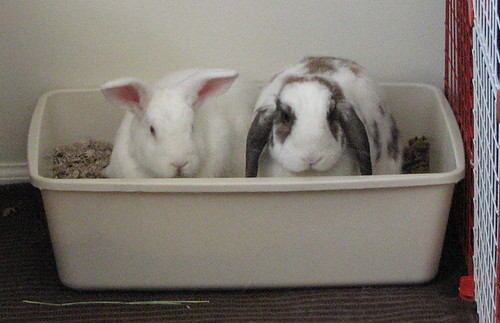 two buns, one litter box