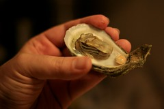 Oyster w/Crab