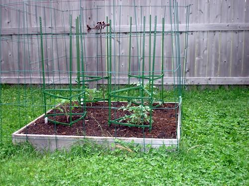 Garden after one week.  5-30-2009 9-19-09 AM