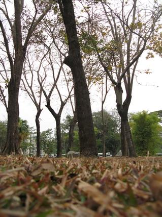 騎腳踏車:高雄公園也是學習區(3.6ys)