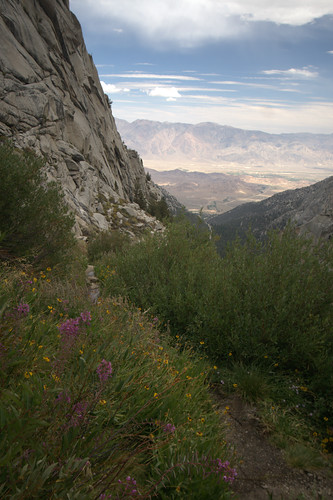 Mountain flowers and view