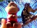 Bantayan Monkey