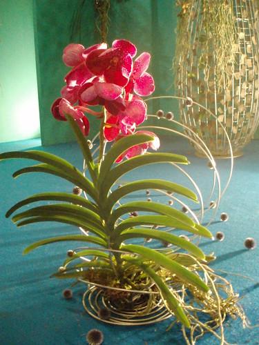 Orchid display von joanne89.