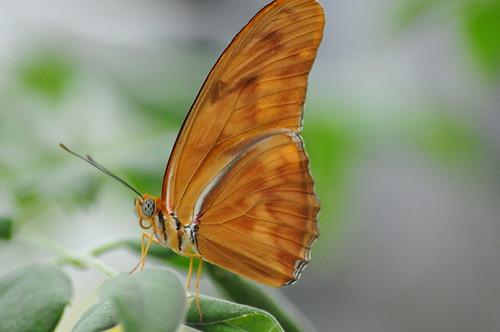 Conservatory of Flowers - Butterflies