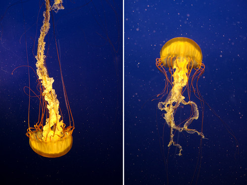 Jellyfish are pretty