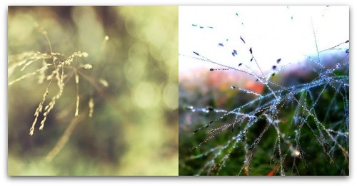 natures webs (by Leaca's Philosophy)
