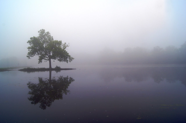 Reflected Expanse
