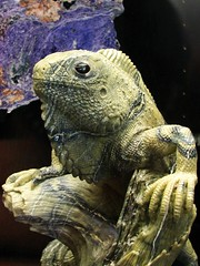 This iguana is made of the mineral Serpentine