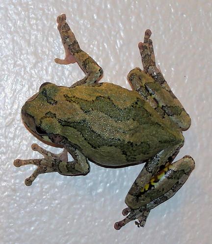 froggy on wall.jpg