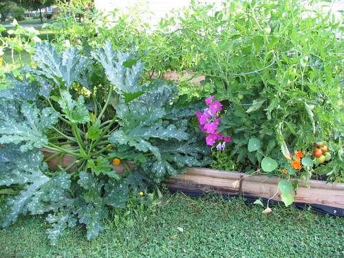Zucchini, petunias, tomatoes