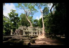 Ta Prohm Temple, Cambodia  402