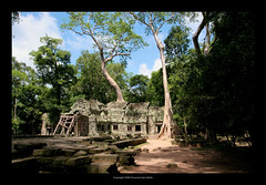 Ta Prohm Temple, Cambodia  402