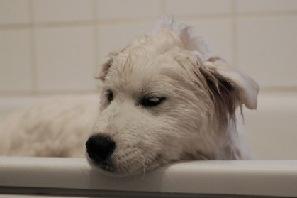 Zack i badet