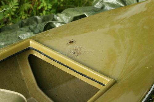 Dock spider on boat
