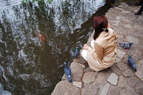 Feeding pigeons and carps
