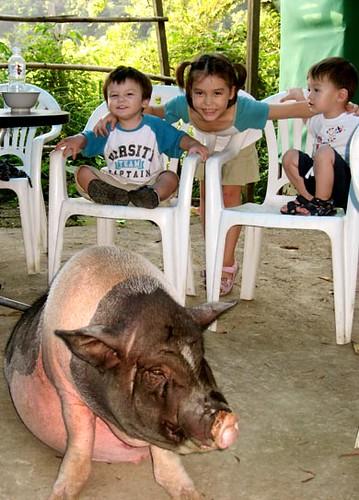 Boys Pig