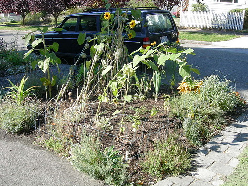 My garden looks crazy