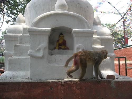 Monkey at Swayambunath Stupa