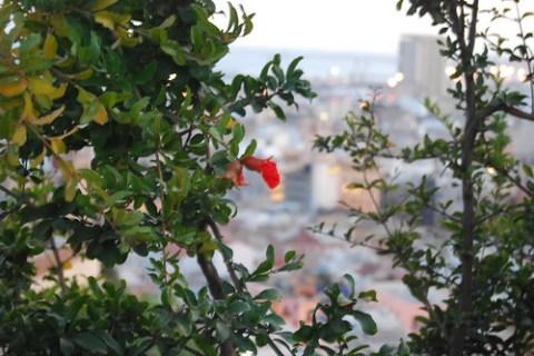 Flor solitaria en Alicante