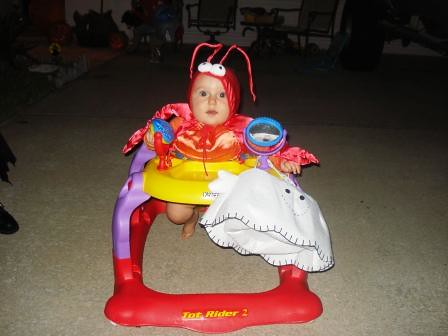 Cutie Pie not freaking out in lobster costume.